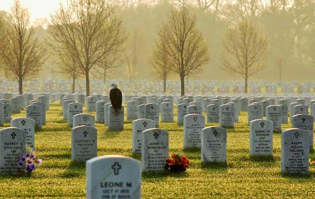 bald-eagle-in-cementery-on-memorial-day